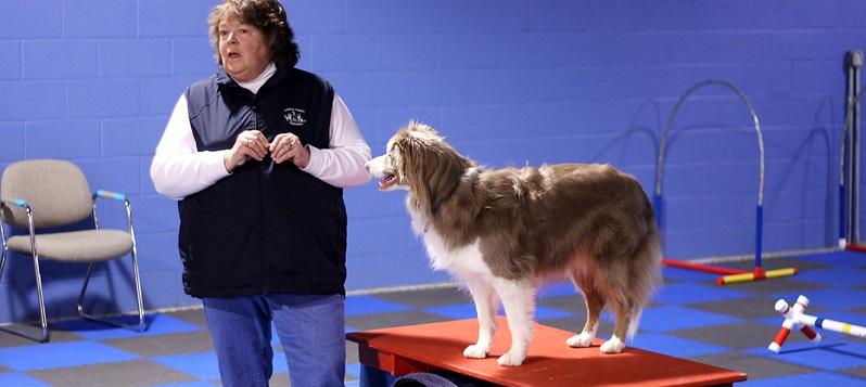Dee Ganley Dog Training Services – Expert Dog Training in